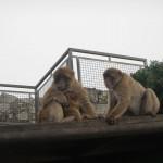 Affen mit Baby