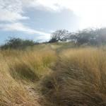 Carpenter Rock Trail1