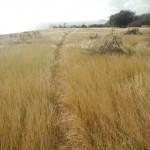 Carpenter Rock Trail3