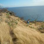 Carpenter Rock Trail5