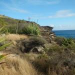 Carpenter Rock Trail7