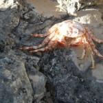 Krabbe Green Island2