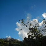 Pelikan Green Island