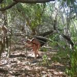 beschwerlicher Weg Green Island