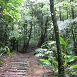 BL Beginn Trail