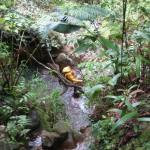 BL Trail6
