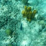 Pigeon Island Koralle mit Fisch