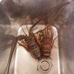 Chikungunya epidemische Ausmaße13