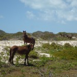Antigua&Barbuda29