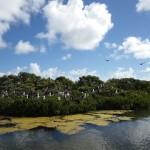 Barbuda & St. Barths08