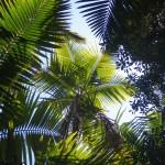 Puerto Rico14