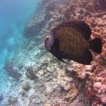 Bonaire28