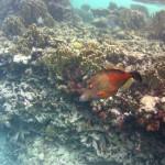 Bonaire32
